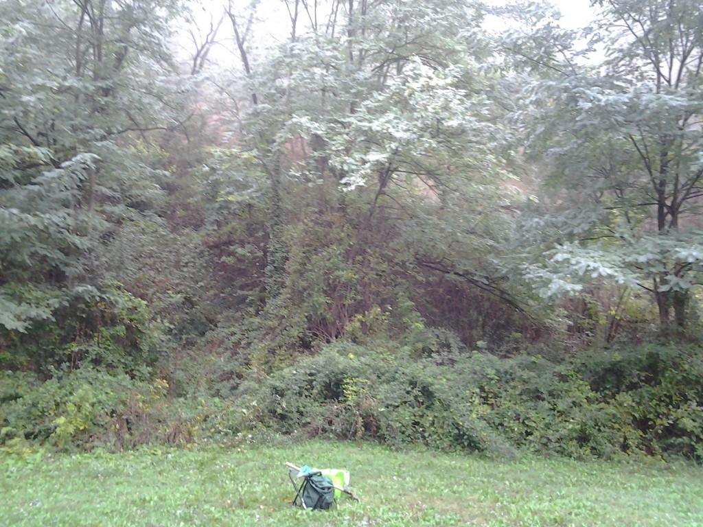 Pas de tir 7 au sud du bosquet d'arbres - ronces (20 oct 2012)